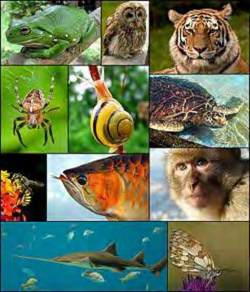 Plants and animals There are many animal species on the planet. The distinction between plant and