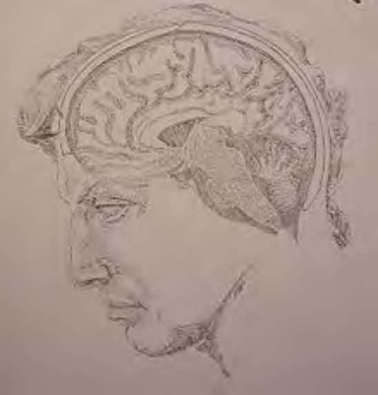 Psychology A sketch of the human brain imposed upon the profile of Michelangelo's David. Sketch by