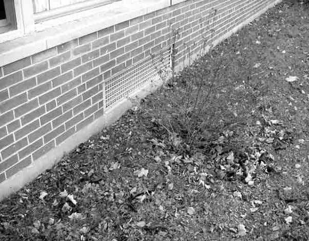 Picture 12 Shrubbery In Front Of Univent Fresh Air Intake