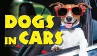 photographs ISBN: 978-1-78274-545-7 £7.99 Hardback 12 Dogs in Cars JAcK ruSSELL Some are behind the wheel,