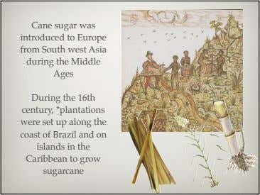 Cane sugar was introduced to Europe from South west Asia during the Middle Ages During