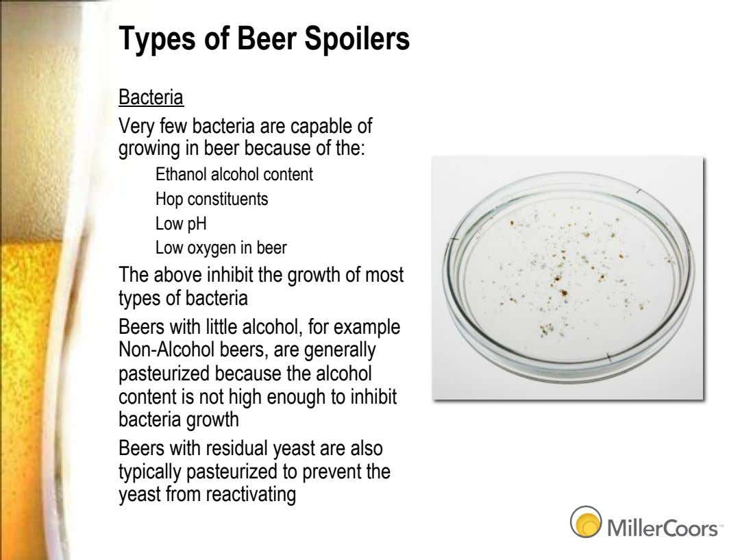 Types of Beer Spoilers Bacteria Very few bacteria are capable of growing in beer because