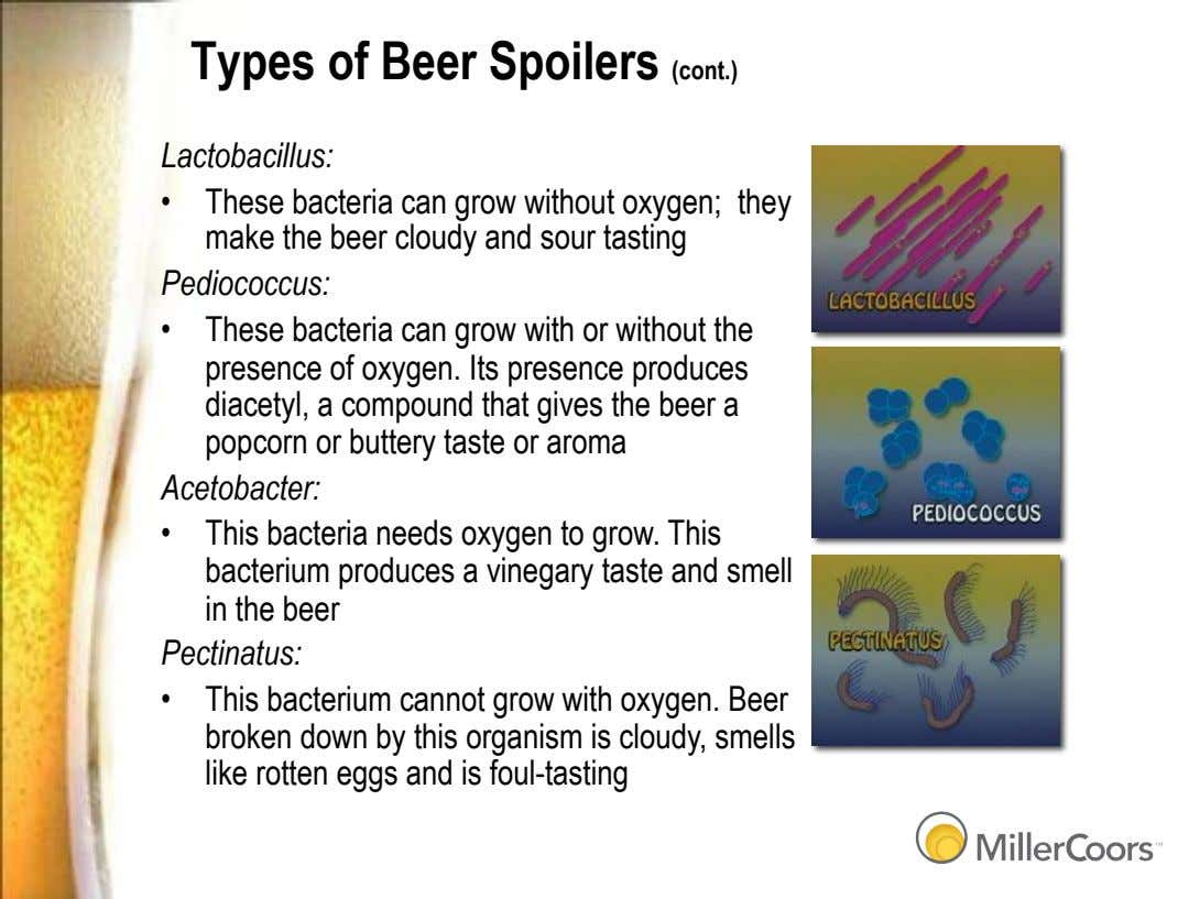 Types of Beer Spoilers (cont.) Lactobacillus: These bacteria can grow without oxygen; they make the