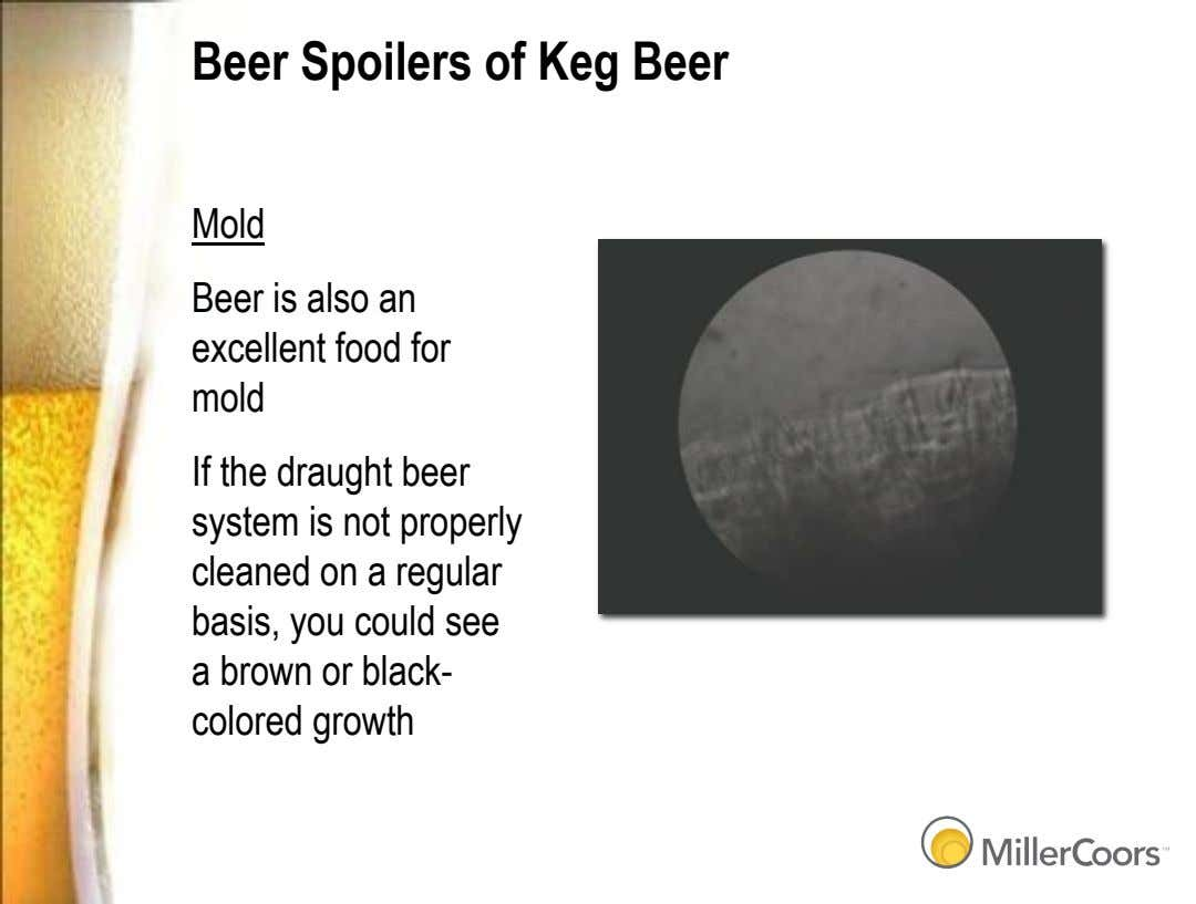 Beer Spoilers of Keg Beer Mold Beer is also an excellent food for mold If