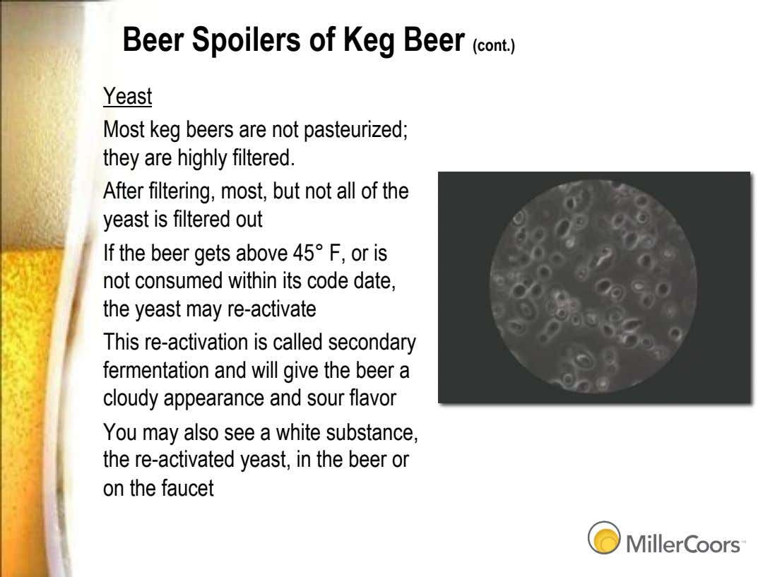 Beer Spoilers of Keg Beer (cont.) Yeast Most keg beers are not pasteurized; they are
