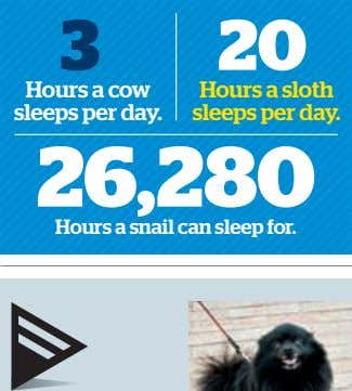 3 20 Hours a cow sleeps per day. Hours a sloth sleeps per day. 26,280
