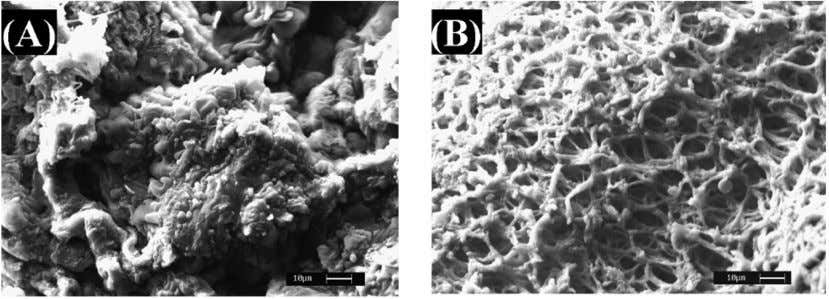 Biosorption of Heavy Metals using Low Cost Biosorbents 945 Figure 3. SEM pictures of (a) Pristine