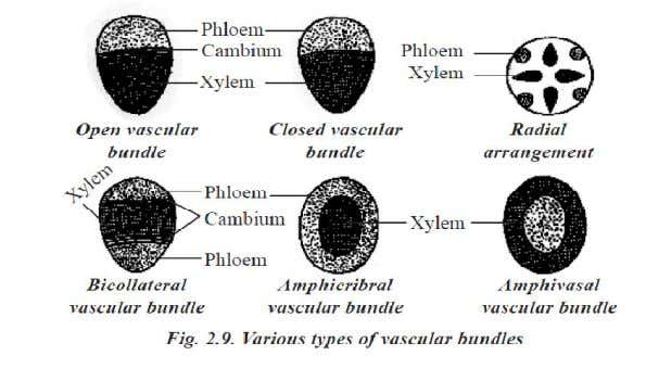 10 MARKS QUESTIONS 1. Describe the vascular tissue system . • The elements of xylem and