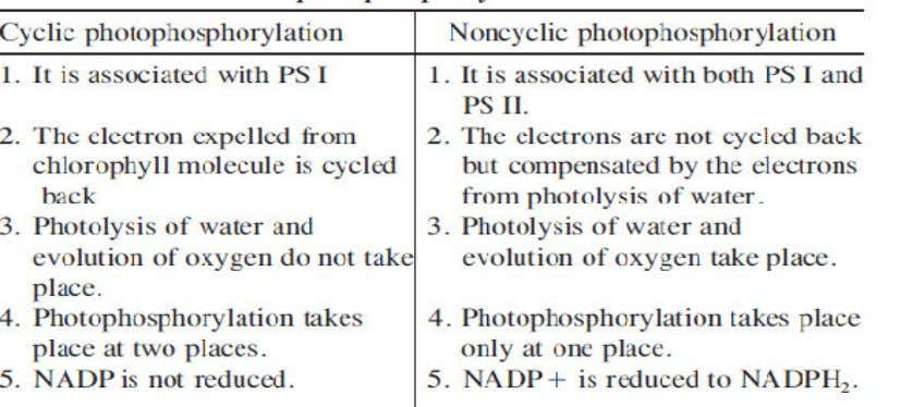 15. Define photoperiodism. The response of a plant to the relative lengths of light and dark
