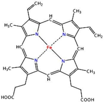 A heme group -consists of a porphyrin ( ion Fe dalam cincin heterosiklik) -Ion Fe (octahedral
