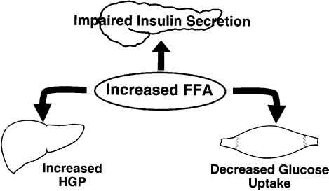 and diacylglycerol) have been shown to impair insulin action Fig. 12. Etiology of type 2 diabetes
