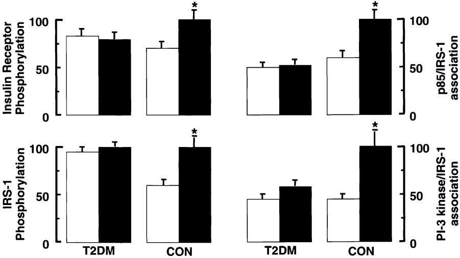 to high glucose concentration also has been shown to Fig. 15. Insulin signaling cascade in T2DM.