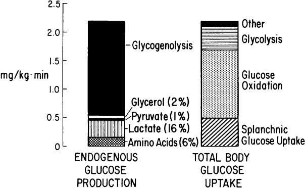 788 R.A. DeFronzo / Med Clin N Am 88 (2004) 787–835 Fig. 1. Postabsorptive state. Glucose