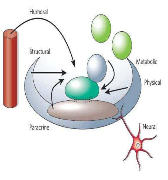  neural inputs and metabolic products of tissue activity Scadden DT. The stem-cell niche as an