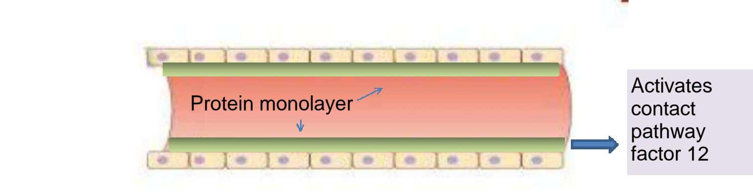 Protein monolayer Activates contact pathway factor 12