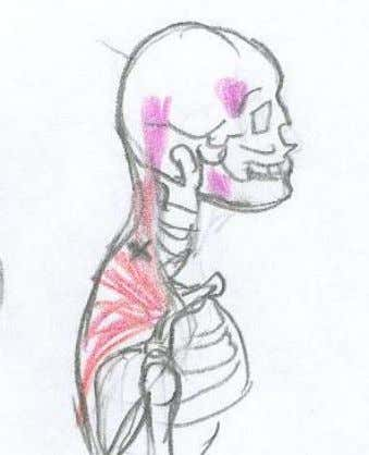 Trapezius Use Stick and tennis ball against the wall. Picture: For trigger points, lower down in