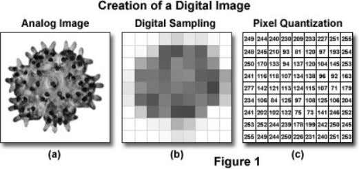 PNG (portable network graphics) Raw data 'text image' Microscopy Primer http://micro.magnet.fsu.edu/primer Dr.