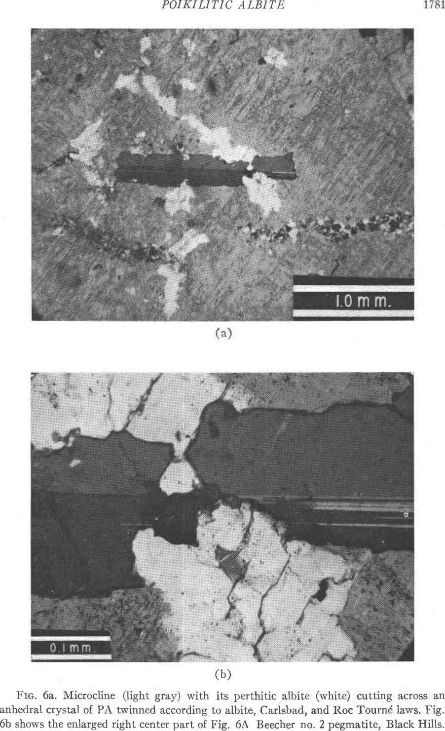 POIKILITIC ALBITE (b) Frc. 6a. Microcline (light gray) with its perthitic albite (white) cutting across