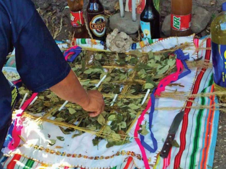 2 4 2 JOURNAL OF ANTHROPOLOGICAL RESEARCH Plate 3. Coca leaf offering during herranza (Photo L.