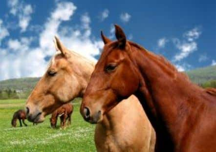 important that horses are in their maximum health. There are many products out there th at