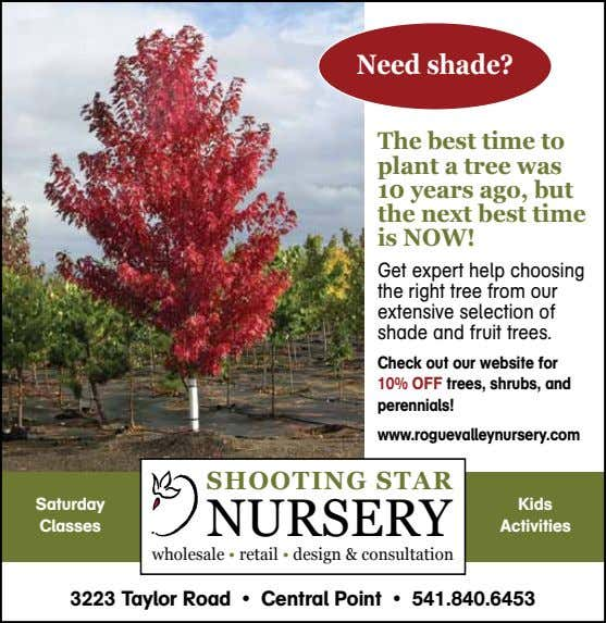 Need shade? The best time to plant a tree was 10 years ago, but the