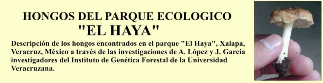 About Me Name: Armando Lopez Location: Xalapa, Veracruz, MX Investigador del Instituto de Genética Forestal,