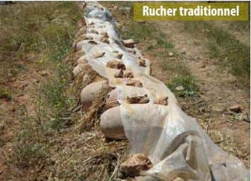 Rucher traditionnel