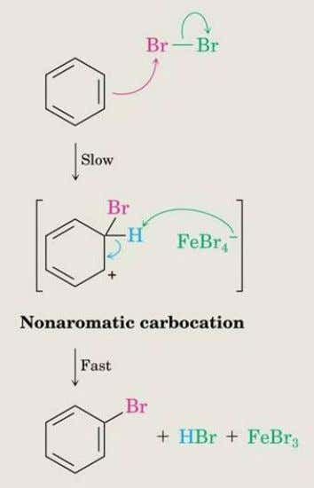 Formation of Product from Intermediate  The cationic addition intermediate transfers a proton to FeBr (from