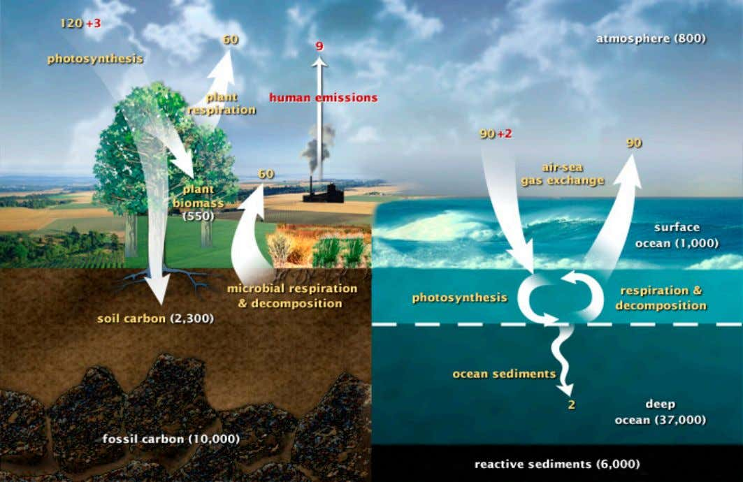 Movement of carbon between land, atmosphere, and oceans in billions of tons of carbon Global