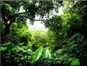 rain forests that ruled the Sylhet region once upon a time. 5. Rema-Kalenga Wildlife Sanctuary :