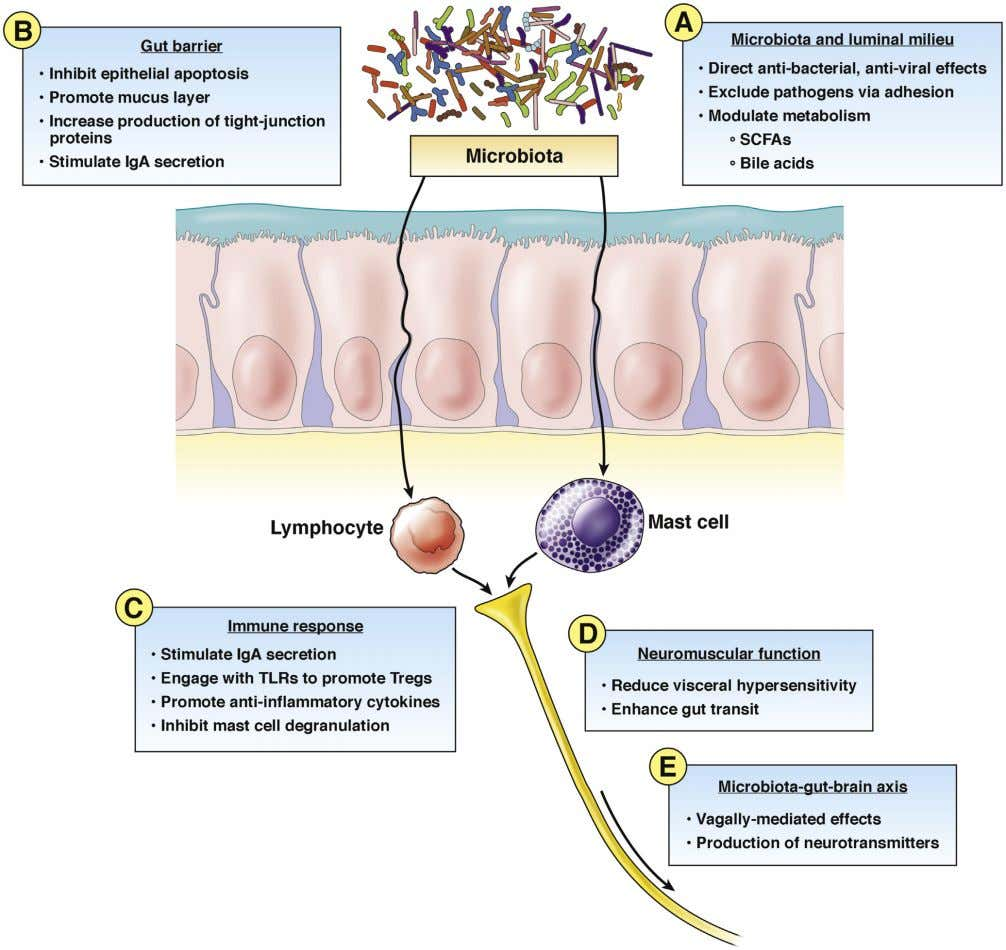 Clinical Gastroenterology and Hepatology Vol. 17, No. 2 Figure 1. Mechanisms of action of probiotics. (