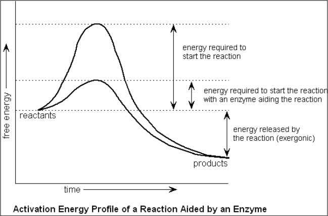 an enzyme catalysed reaction. The increase in rate of reaction decreases the time to achieve the