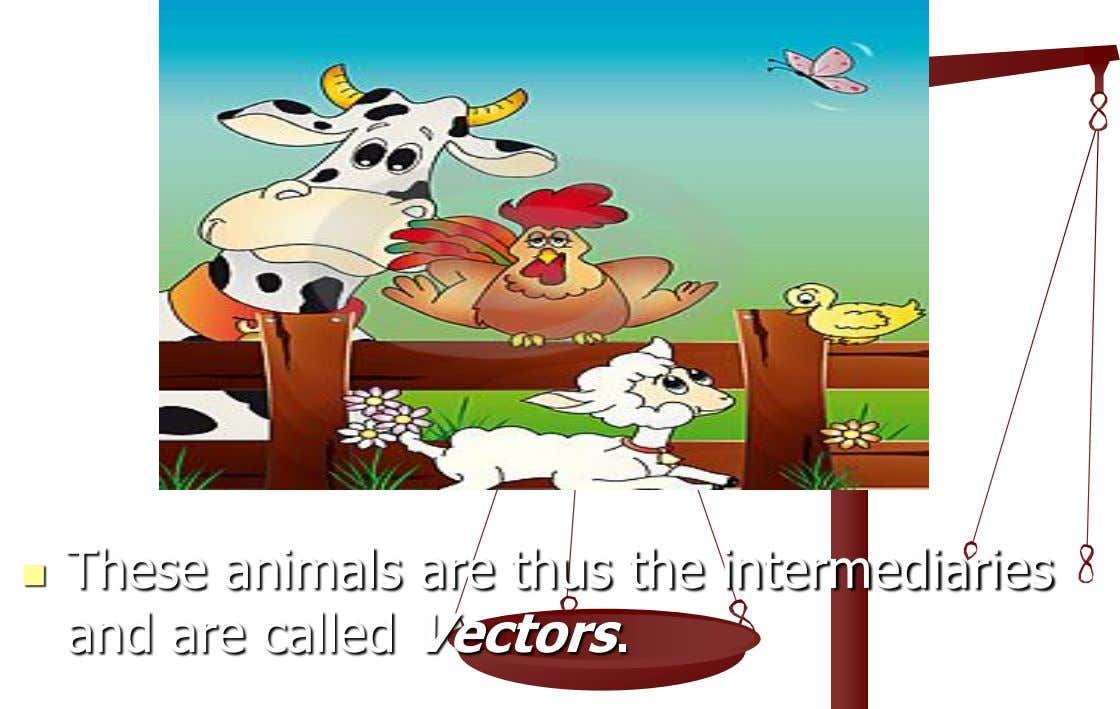  These animals are thus the intermediaries and are called Vectors.