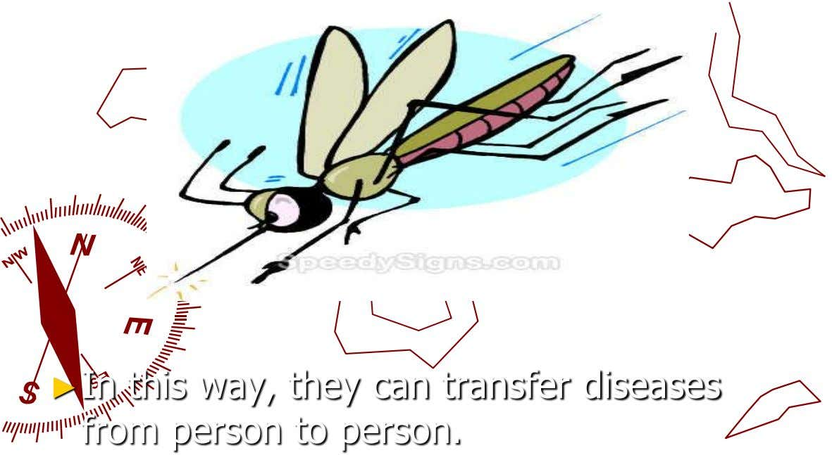 ►In this way, they can transfer diseases from person to person.