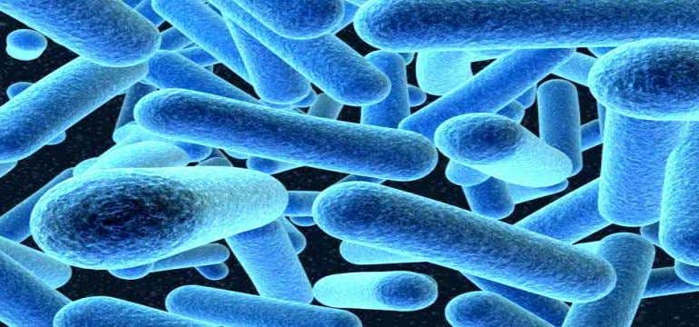  If the number of microbes is very small, the disease manifestations may be minor or