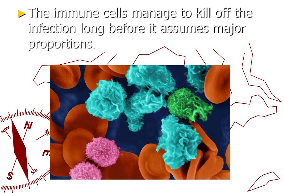 ►The immune cells manage to kill off the infection long before it assumes major proportions.