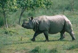 http://welcomenepal.com/promotional/know-nepal/plants/ Sal forest Swamp deer G a u r Rhino Monday, March 23, 2015 1 9