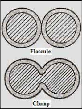 interface (Allen et al., 2008b) (Figure 1.7 and Figure 1.8). Figure 1.7: A floccule and a