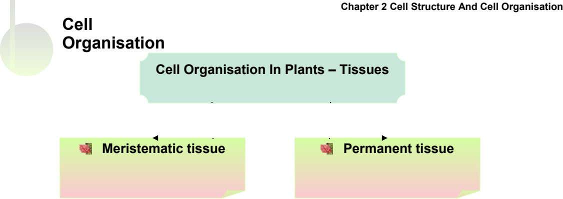 Chapter 2 Cell Structure And Cell Organisation Cell Organisation Cell Organisation In Plants – Tissues Meristematic