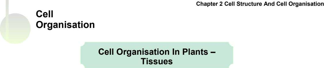 Chapter 2 Cell Structure And Cell Organisation Cell Organisation Cell Organisation In Plants – Tissues