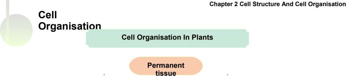 Chapter 2 Cell Structure And Cell Organisation Cell Organisation Cell Organisation In Plants Permanent tissue