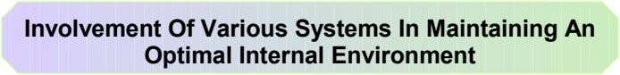Involvement Of Various Systems In Maintaining An Optimal Internal Environment