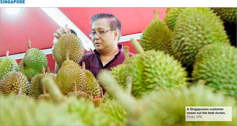 SINGAPORE A Singaporean customer noses out the best durian. Photo: EPA