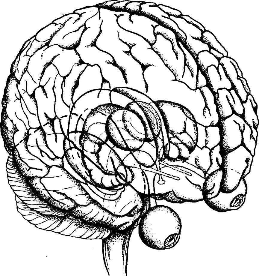 USE YOUR HEAD Fig I The brain Source: SCIENTIFIC AMERICAN (sec acknowledgements for details) Since I