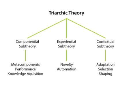 can influence the other. Triarchic Theory (Robert Sternberg) The triarchic theory of intelligence consists of three