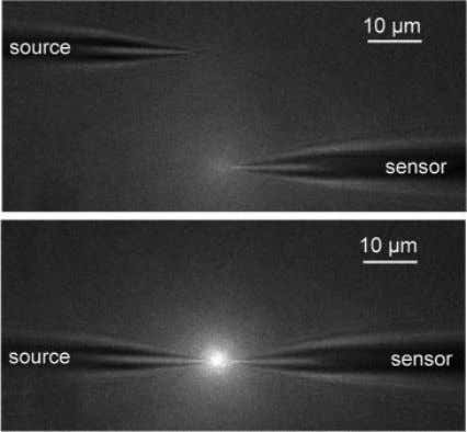 increases in presence of sodium Imaged with confocal microscope Piper, Klenerman et al , J. Am.