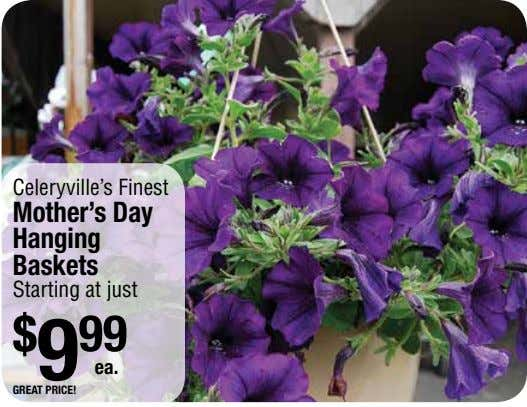 Celeryville's Finest Mother's Day Hanging Baskets Starting at just $ 9 99 ea. great price!