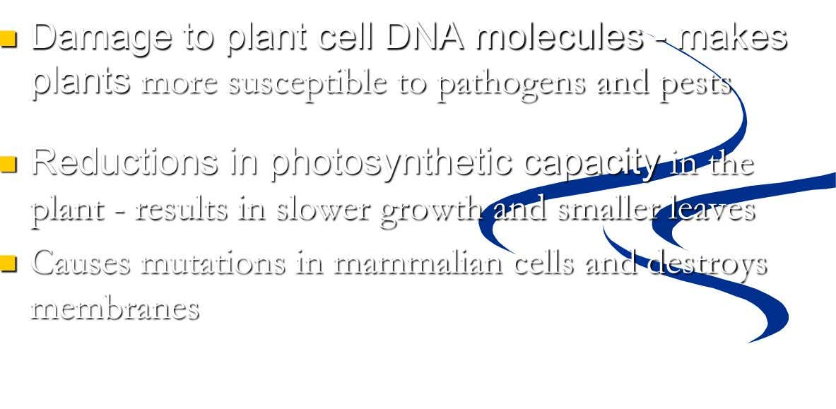  Damage to plant cell DNA molecules - makes plants more susceptible to pathogens and pests