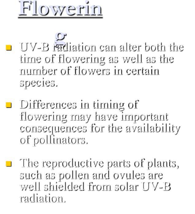 Flowerin g  UV-B radiation can alter both the time of flowering as well as the