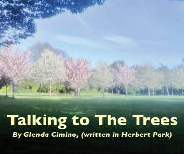Talking to The Trees By Glenda Cimino, (written in Herbert Park)